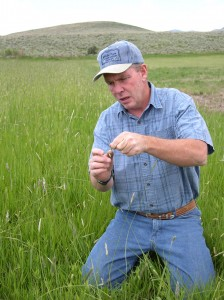 Mark Volt looks at alfalfa recently drilled