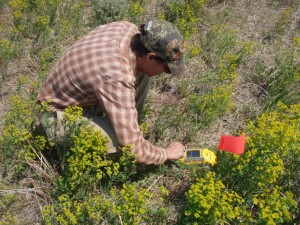 Range Assessments & Noxious Weed Control
